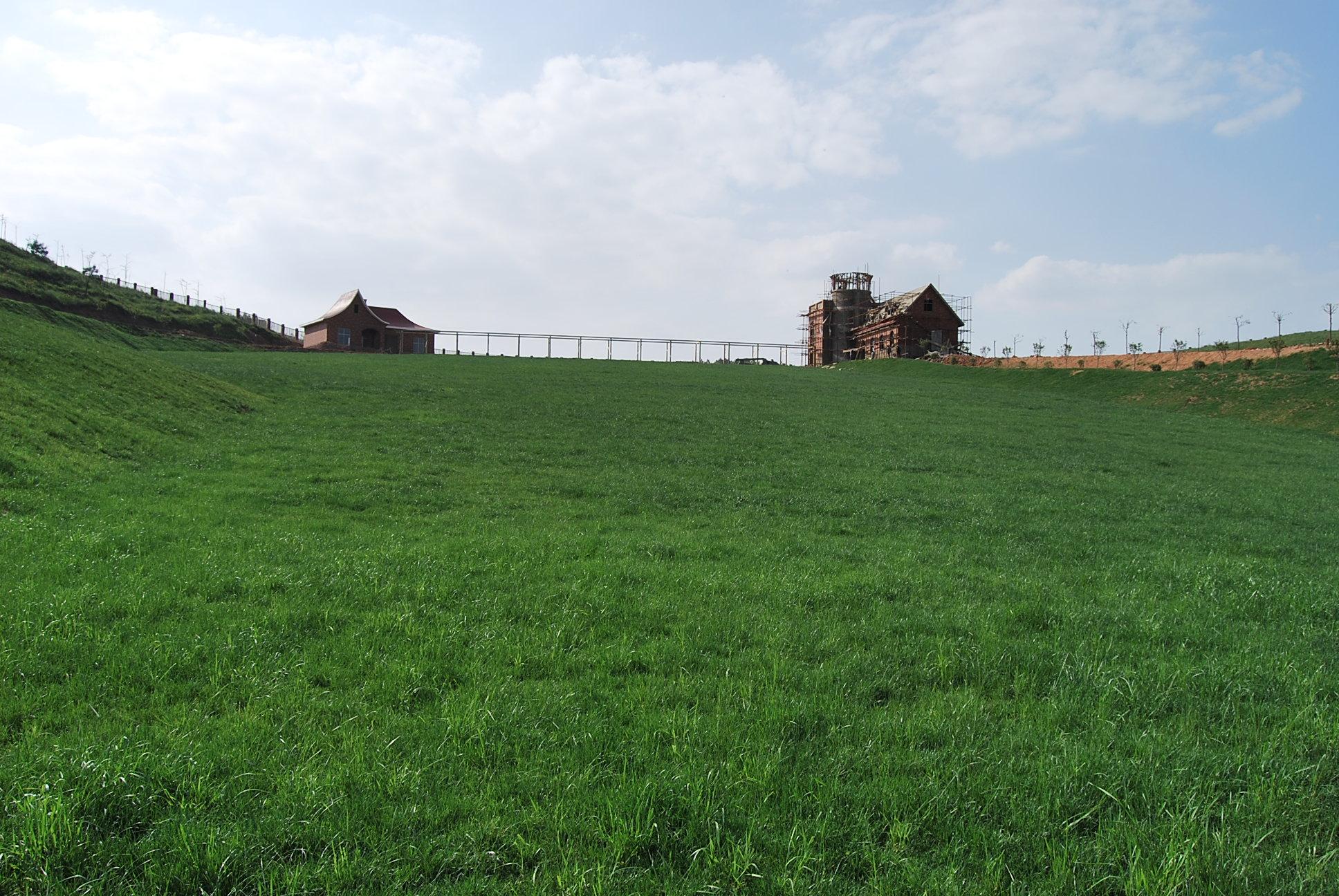 苏格兰牧场