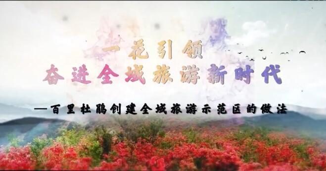 【视频】百里杜鹃全域万博新网站汇报片